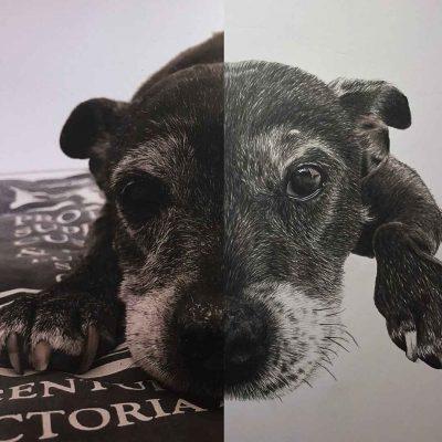 Pet Portrait Art Dog