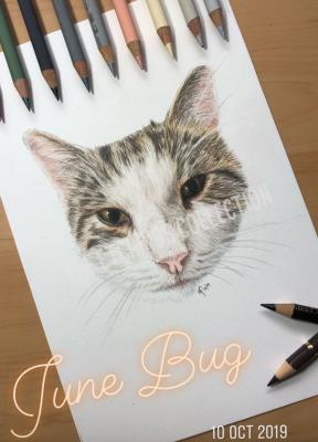 Pet Portrait Cat